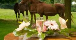 Leuk Huwelijk nabij Binkom